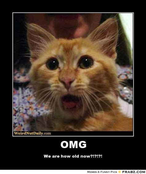Meme Omg - omg cat meme www imgkid com the image kid has it