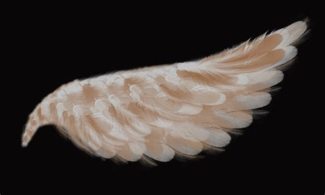 on angel wings the gallery for gt realistic angel wings drawing