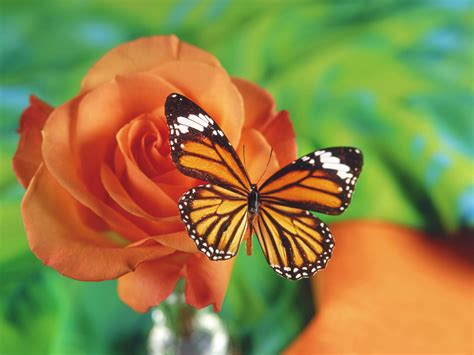 imagenes sobre mariposas banco de imagenes y fotos gratis imagenes de mariposas