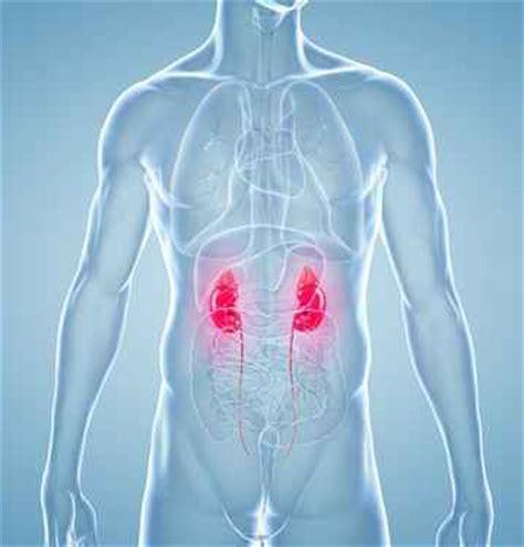 insufficienza renale e alimentazione alimentazione nell insufficienza renale www