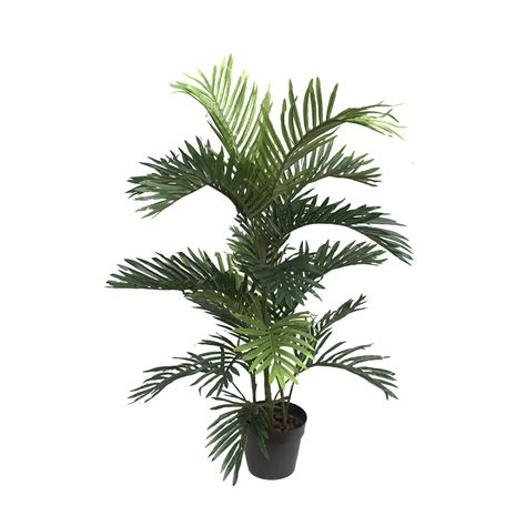 areca palm areca palm 90cm