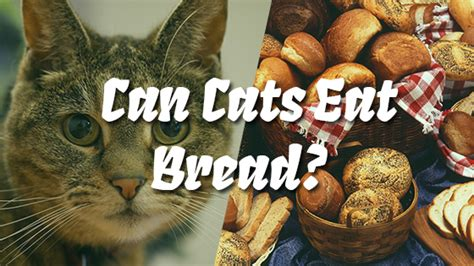 can dogs eat wheat bread can cats eat bread pet consider