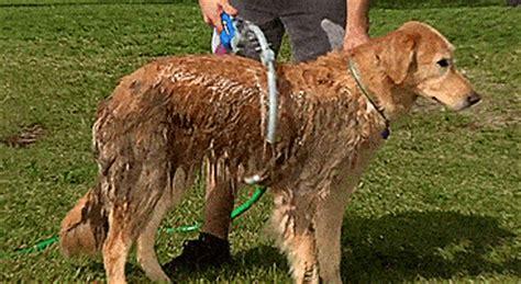 woof washer   circular dog shower  easy dog baths