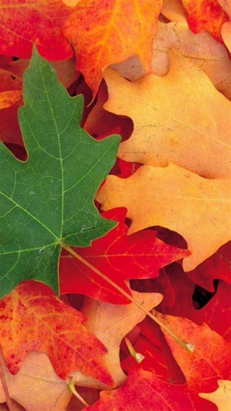 whatsapp wallpaper remove autumn wallpapers for chat android apps on google play