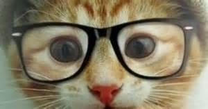 30 adorable pictures of cats wearing glasses