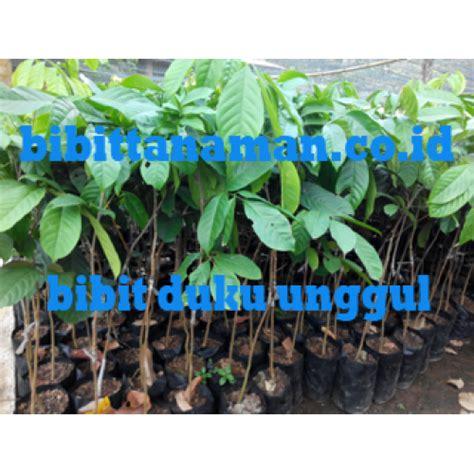 Harga Bibit Duku Palembang jual bibit tanaman unggul murah di purworejo