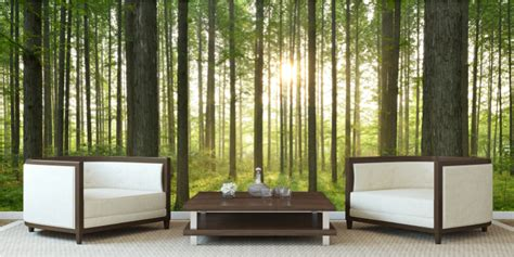 Wall Murals Forest Scene grafix wall art for decals stickers and prints