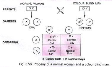 color blindness genetics genetics disorders 2 types of genetics disorders in