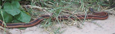 Garter Snake Deck About Tony