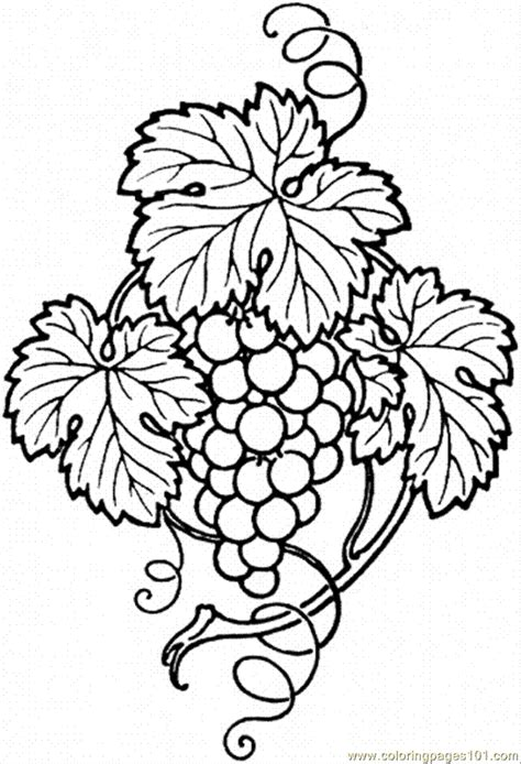 coloring page of grapes on a vine free coloring pages of drawings of grape