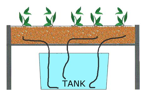 What is Hydroponic growing? Growth Technology