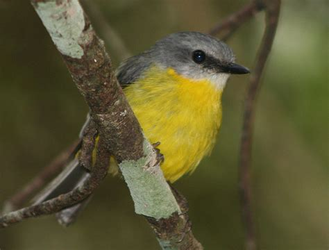 study shows urban noise leads to less songbird diversity