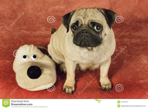 pug dog house pug and house slipper as a dog stock image image 11751471