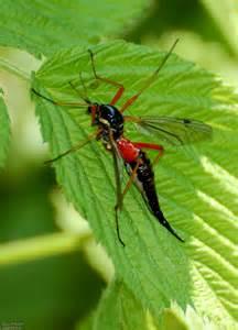 garten insekten insekten garten gruenpflanzen farbiges insekt holzschnake
