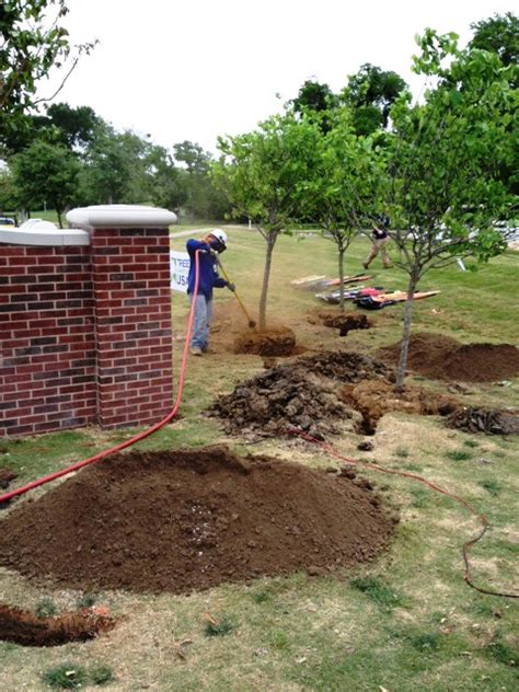 transplanting a maple tree fall is for planting and transplanting trees and shrubs preservation tree services