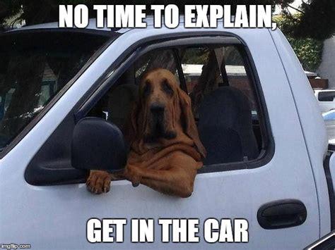 No Car Meme - dog in truck imgflip