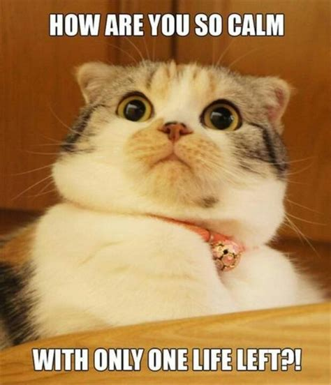 Scared Cat Meme - 1000 images about scared cats on pinterest grumpy cat