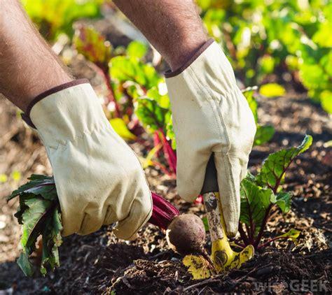 types  garden gloves  pictures