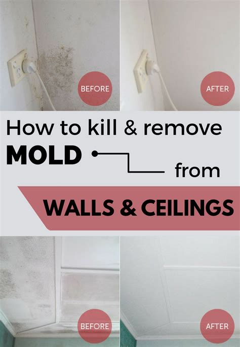 how to get rid of mold on walls in bathroom how to kill remove mold from walls and ceilings