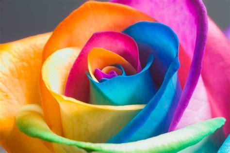 imagenes de rosas alegres happy roses