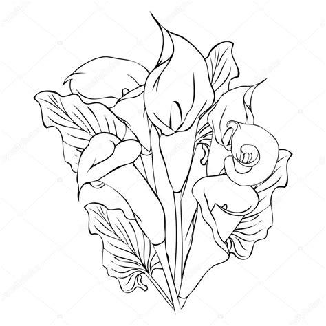 dibujo de flores de cala vector de stock 98556190