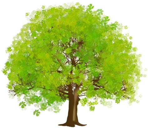 what goes on a tree large green tree clipart tree trees and green clipartix