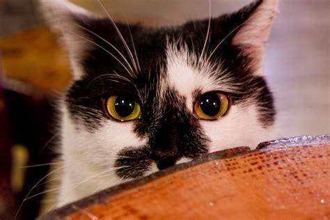 Ovula Cat 10 Softgel Obat Kucing obat obatan manusia yang berbahaya untuk kucing meowmagz