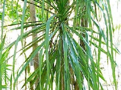 Plante Porte Malheur by Les Plantes Vertes Probl 232 Mes Fr 233 Quents Et Solutions