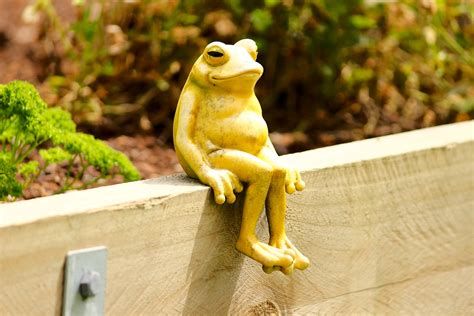 happy the the happy frog