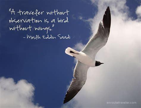 bird  wings en route traveler