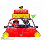 Dog Driving A Car Stock Photo  Image 55854046