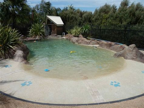 Backyard Pools For Dogs 25 Best Ideas About Swimming Pools On Diy