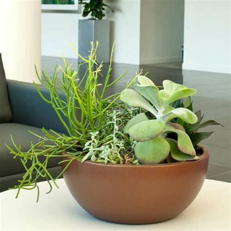 indoor plants arrangement ideas 1000 images about indoor plants on pinterest planters