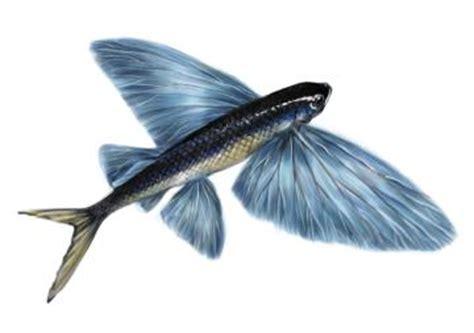 pesci volanti volante pesci animali nel mondo
