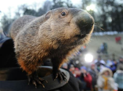 groundhog day canada groundhog day in canada who will six more weeks of