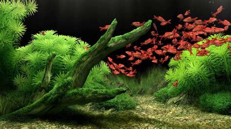 dream aquarium   fish  youtube