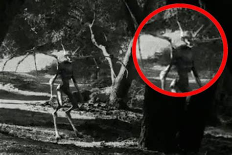 amazing mystery videos: mysterious creatures caught on camera