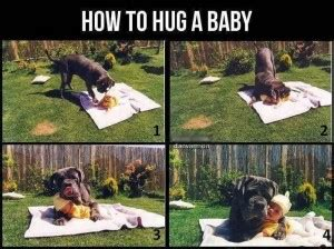 Serious Dog Meme - dog and baby photos are they cute or dangerous