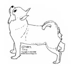 chihuahua coloring pages real chiwawa coloring pages coloring pages