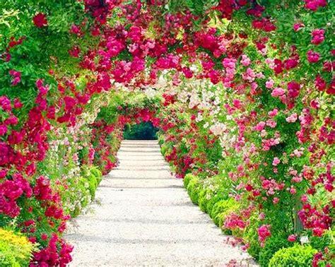 imagenes de paisajes rosas paisajes de flores fotografias y fotos para imprimir