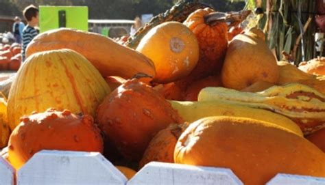 Dobyns Dining Room Menu by 100 Pumpkin Patch Bastrop County Pumpkin Patches In
