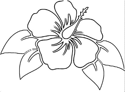 hibiscus flower coloring pages free coloring pages of hibiscus flowers az coloring pages