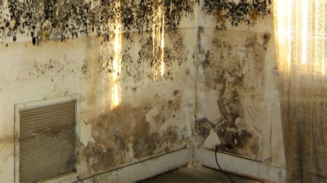 How To Stop Mold In Bedroom by How To Get Rid Of Mold In Your Bedroom Walk In Closet Office