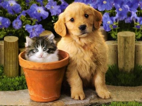 best puppies to own best dogs to own with cats pet photos gallery zx3mqdr3jv