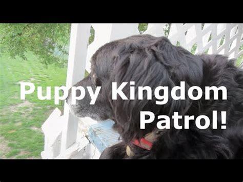puppy kingdom puppy kingdom patrol