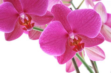 imagenes hermosas de orquideas banco de imagenes gratis 5 fotos de orqu 237 deas de colores
