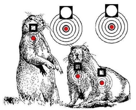 free printable shooting targets for pistol rifle airgun printable air rifle targets 750 designs on cd hunting