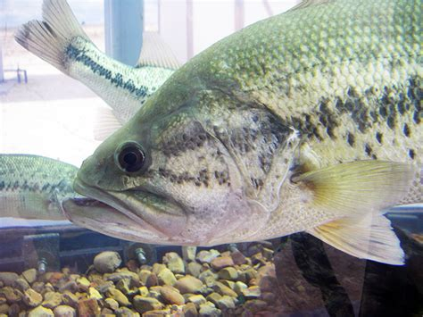 and fish nm fish vendors new mexico department of fish