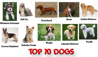 Top most popular pet dogs in the world below to make your decision