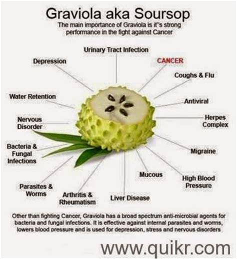 Graviola Noni Tea suvarna prashan cancer cure by soursop graviola